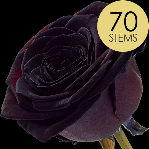 70 Luxury Black Roses