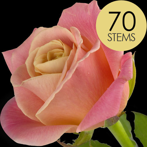 70 Luxury Peach Roses