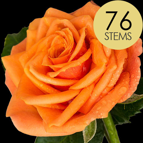 76 Luxury Orange Roses