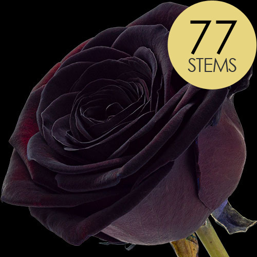 77 Luxury Black Roses