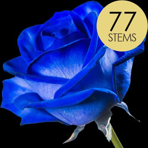 77 Blue (Dyed) Roses