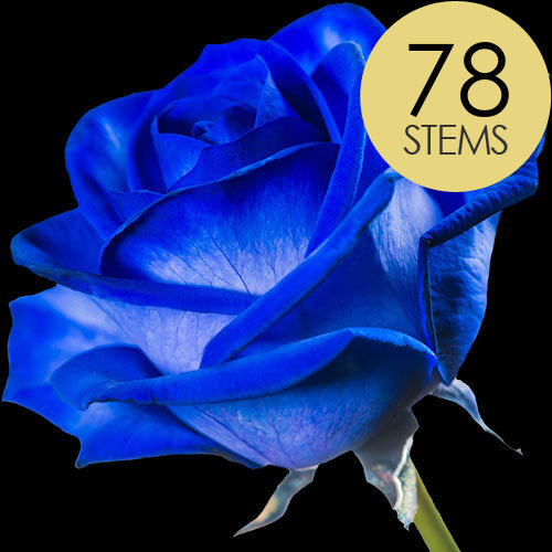 78 Blue (Dyed) Roses