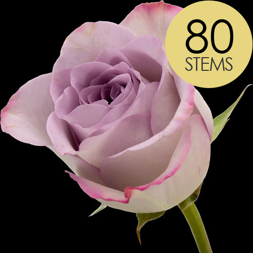80 Lilac Roses