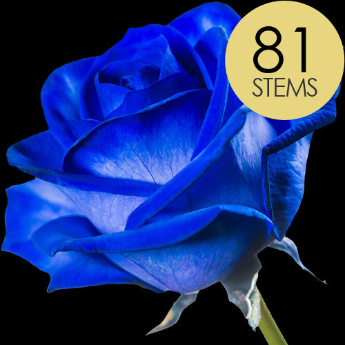 81 Blue (Dyed) Roses