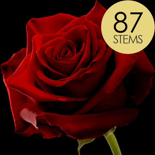 87 Red Roses