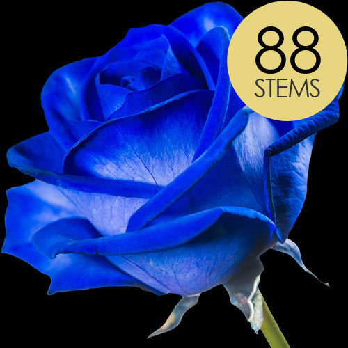 88 Blue Roses