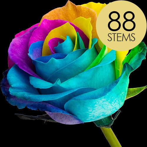 88 Classic Happy Rainbow Roses