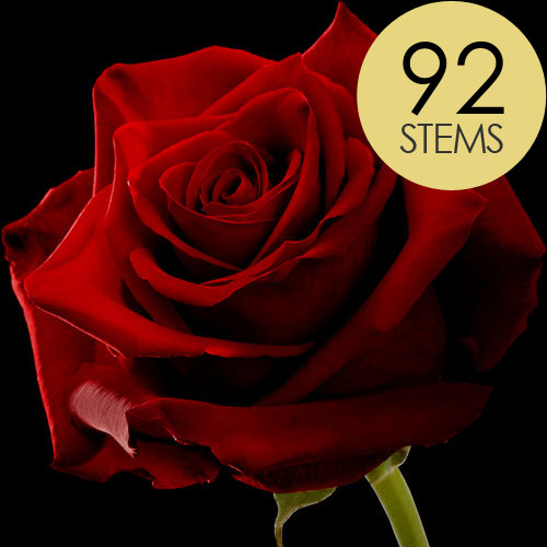 92 Large Headed Red Naomi Roses