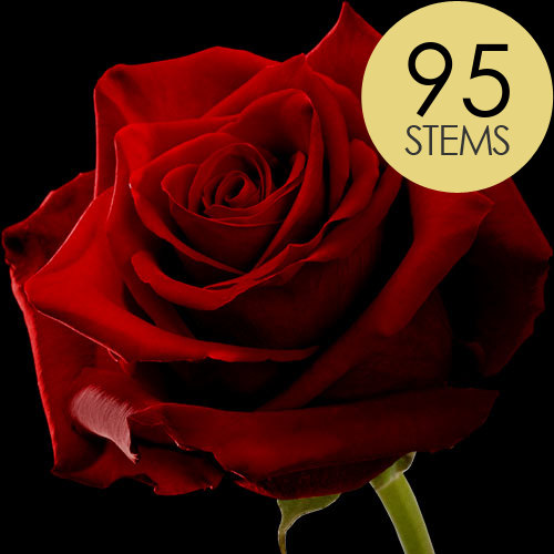 95 Large Headed Red Naomi Roses