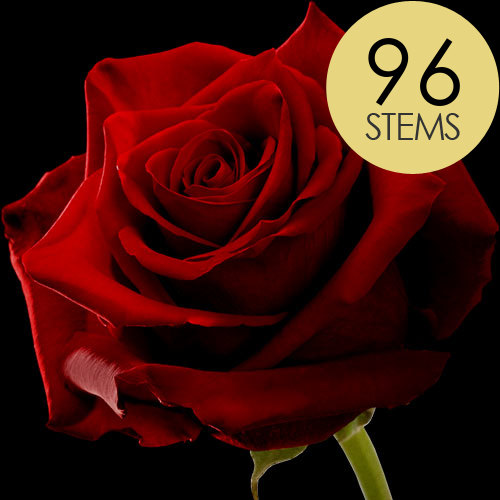 96 Large Headed Red Naomi Roses