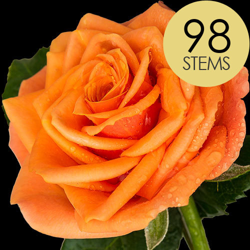 98 Luxury Orange Roses