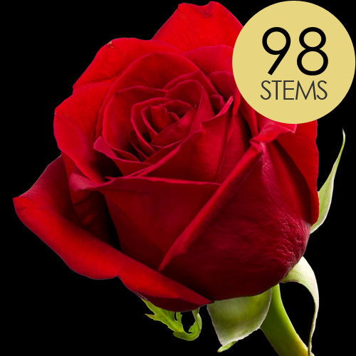98 Classic Bright Red Freedom Roses
