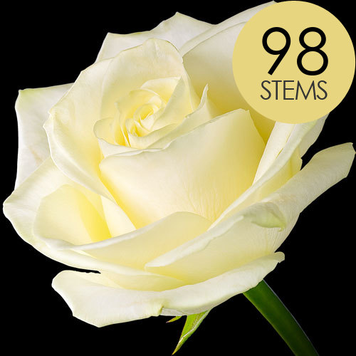 98 Luxury White Roses