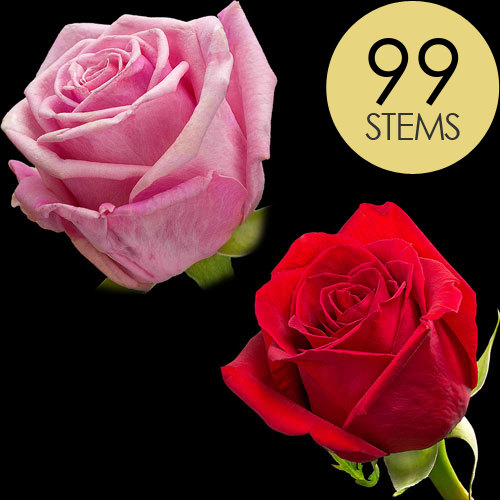 99 Classic Red and Pink Roses