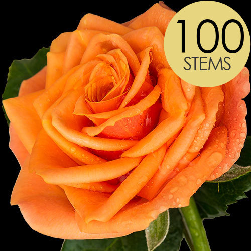 100 ORANGE Roses handtied into a Luxury Bouquet