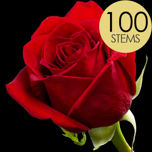100 Classic Bright Red Freedom Roses
