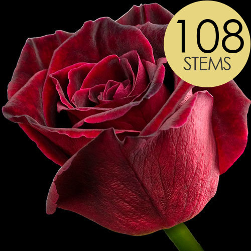 108 Wholesale Black Baccara Roses