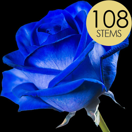 108 Wholesale Blue (Dyed) Roses