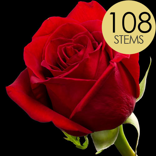 108 Bright Red Freedom Roses
