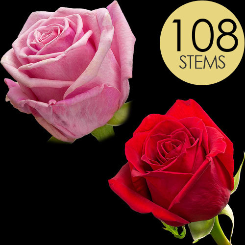 108 Red and Pink Roses