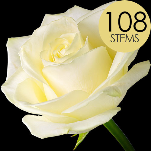 108 Wholesale White Roses