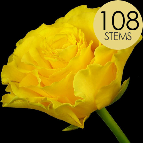 108 Wholesale Yellow Roses