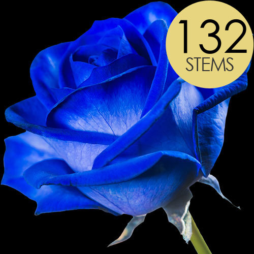 132 Blue Roses