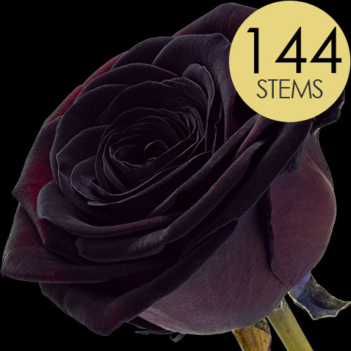 144 Wholesale Black Roses