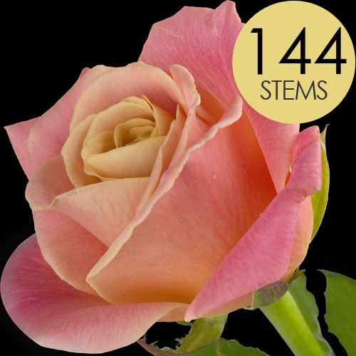 144 Wholesale Peach Roses