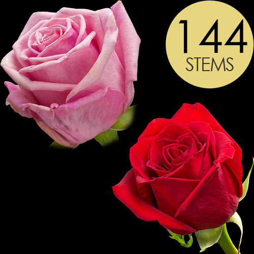 144 Red and Pink Roses