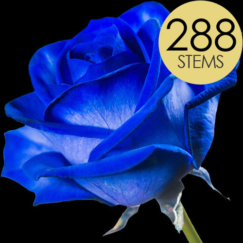 288 Wholesale Blue (Dyed) Roses