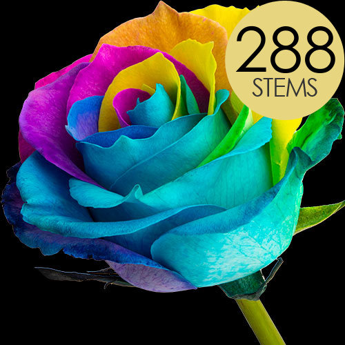 288 Wholesale Happy (Rainbow) Roses