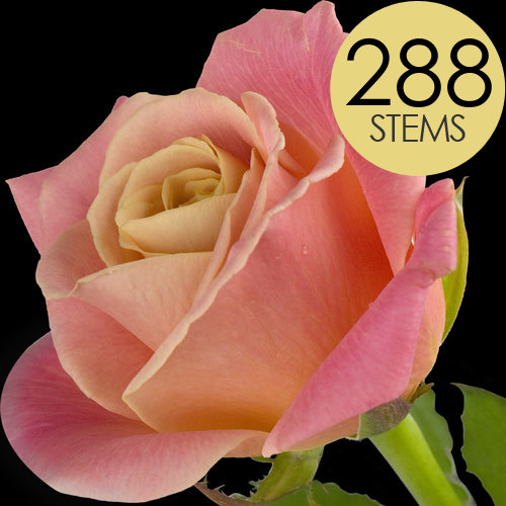 288 Peach Bulk Roses