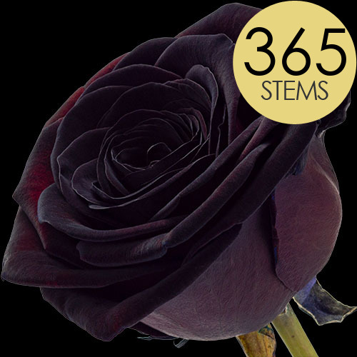 365 Wholesale Black (Dyed) Roses