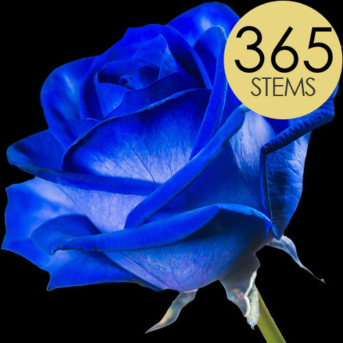 365 Wholesale Blue (Dyed) Roses