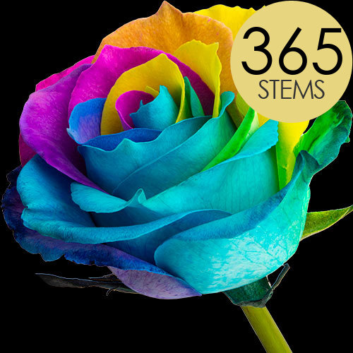 365 Wholesale Happy (Rainbow) Roses