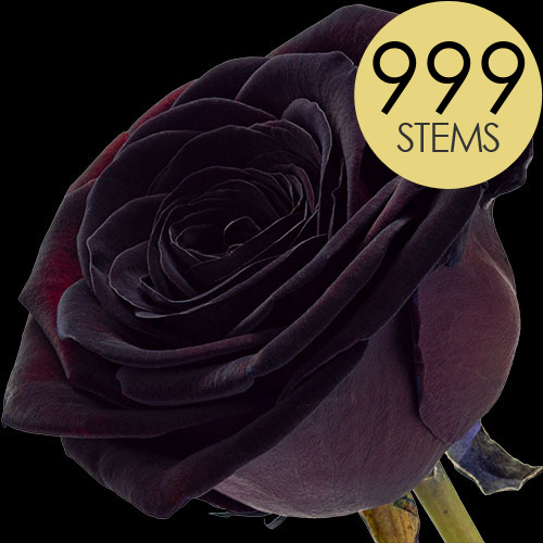 999 Luxury Black Roses