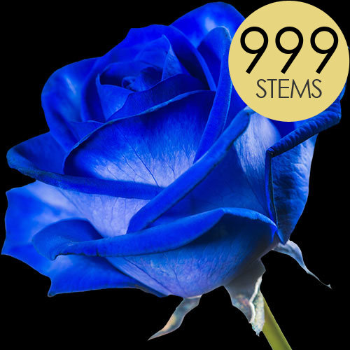 999 Wholesale Blue (Dyed) Roses