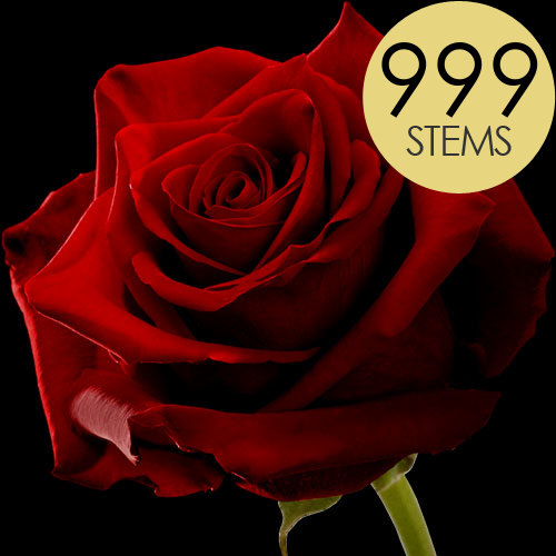 999 Large Headed Red Naomi Roses