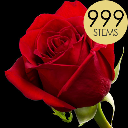 999 Luxury Bright Red Freedom Roses
