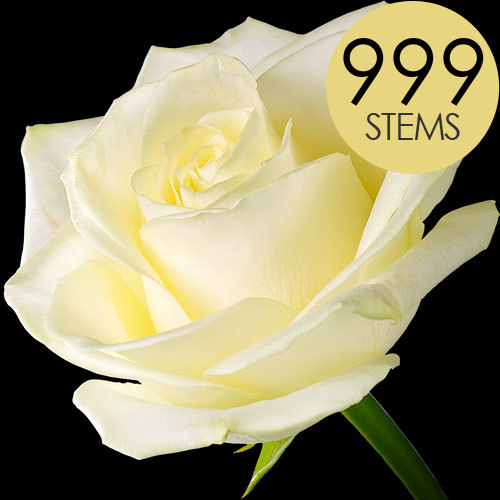 999 Luxury White Roses
