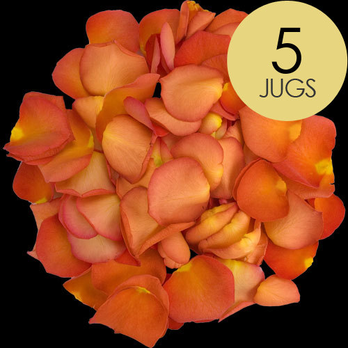 5 Jugs of Peach Rose Petals