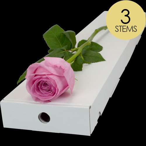 3 Classic Pink Roses