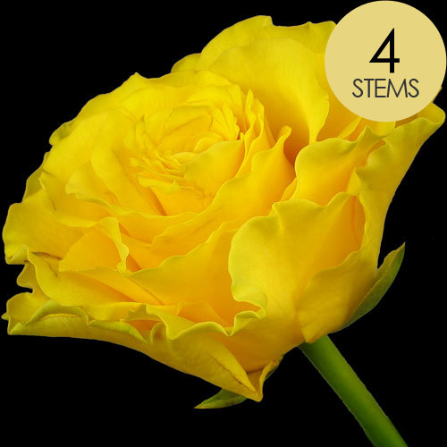4 Classic Yellow Roses