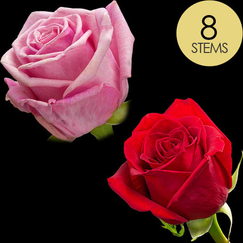 8 Classic Red and Pink Roses