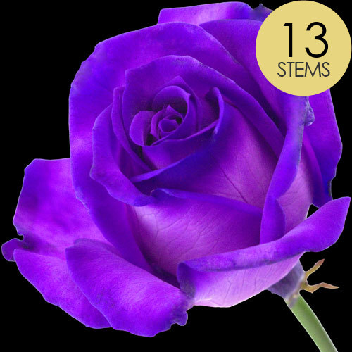 13 Luxury Purple Roses