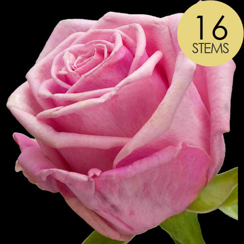 16 Pink Roses