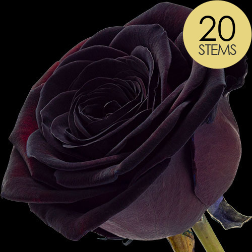 20 Luxury Black Roses