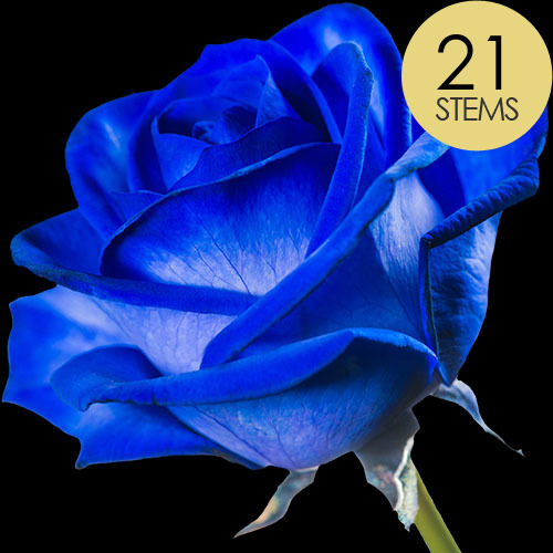 21 Luxury Blue Roses
