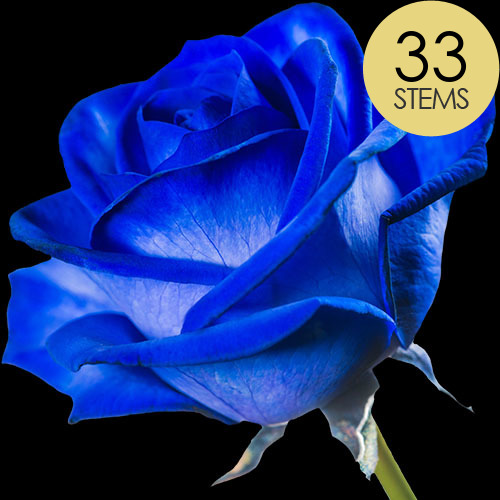 33 Blue (Dyed) Roses